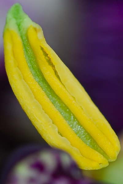 The ways of the passion flowers I