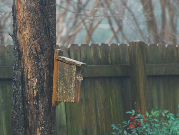 Squirrel and rain shelter